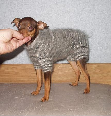 Вязаная одежда для собак своими